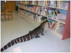 Even Gators Read at KLE